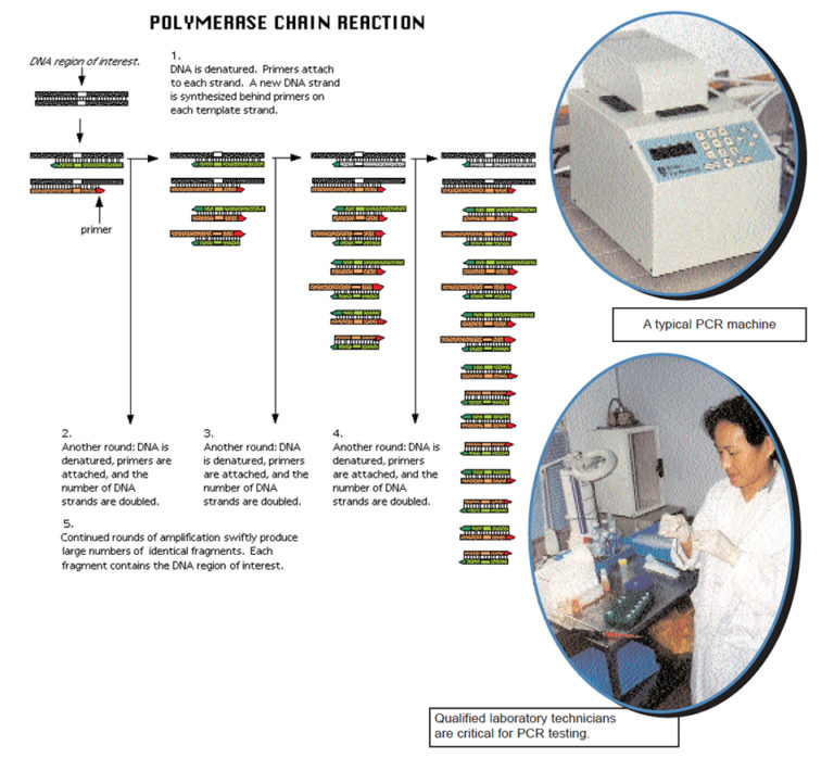 Article image for What is PCR?