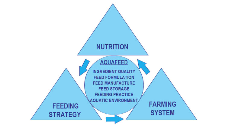 Article image for Shrimp feeds and feeding practices for the next millennium