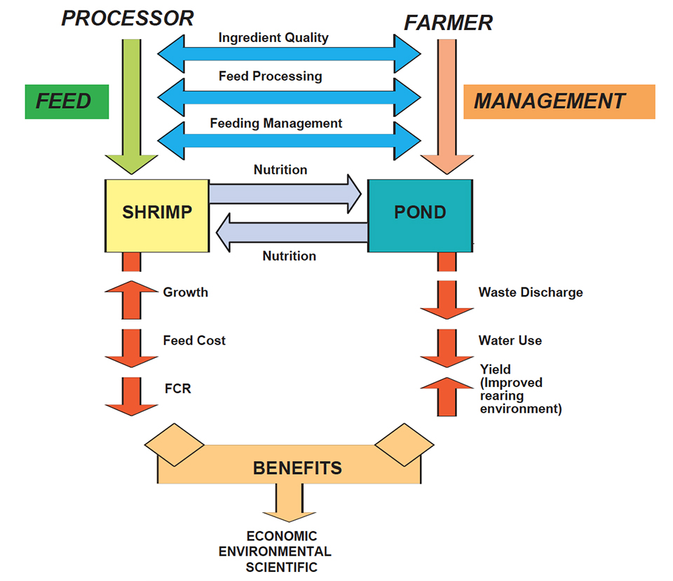 Shrimp feeds and feeding practices