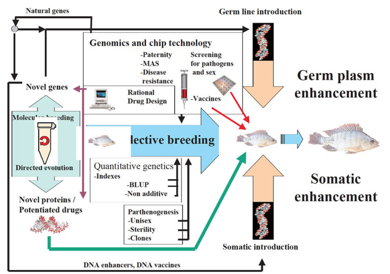 Article image for Bioinformatics: The ultimate breeding tool
