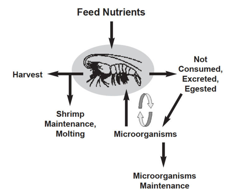 Article image for Microorganisms and feed management in aquaculture