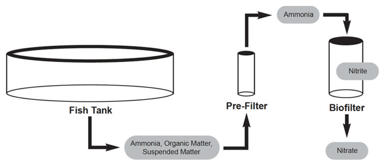 Article image for Improving biofiltration in recirculating aquaculture systems