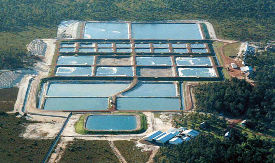 Article image for Changing paradigms in shrimp farming, part 3