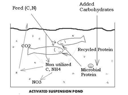activated suspension pond