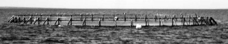 Article image for Aquaculture of pelagic fish, part 1