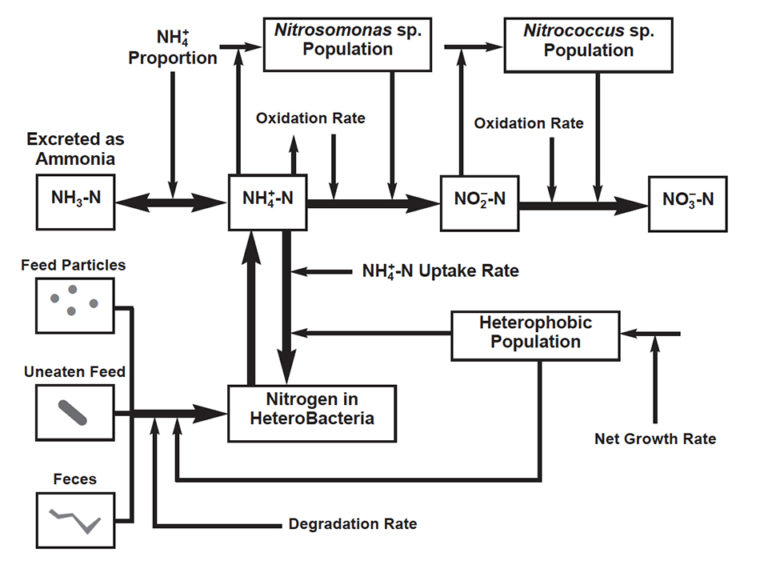 Article image for Role of bacteria on nutritional and management strategies in aquaculture systems
