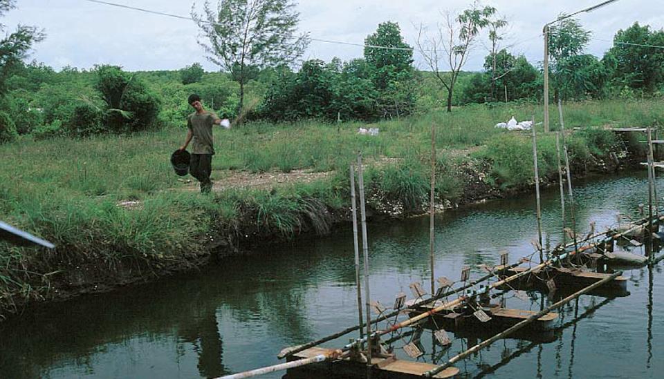 farm systems in Thailand