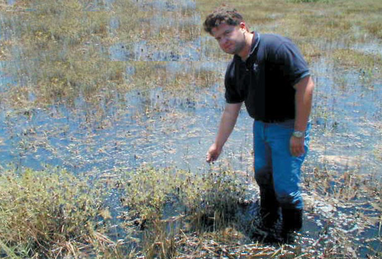Article image for Treatment of shrimp pond effluent using constructed wetlands