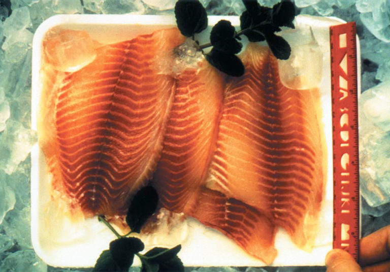 Article image for Evolution of processed tilapia products in the U.S. market