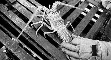 Article image for Adaptive immunity in invertebrates