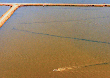 Article image for Sludge: An obstacle to shrimp health