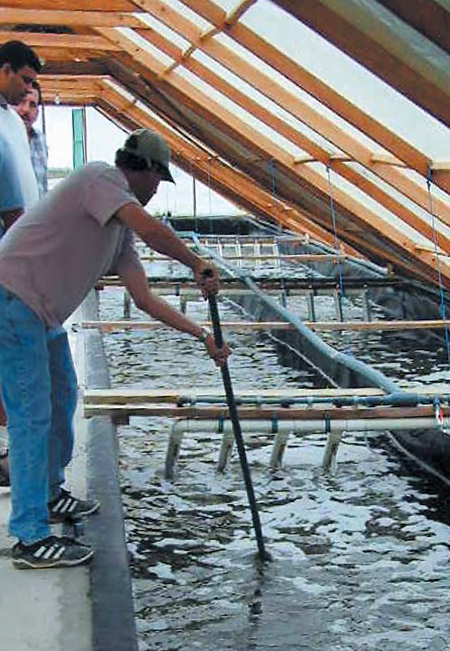 Article image for Raceway nursery production increases shrimp survival and yields in Ecuador
