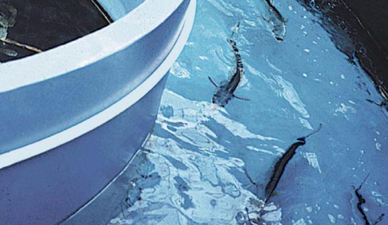 Article image for Aquaculture of pelagic fish, part 4