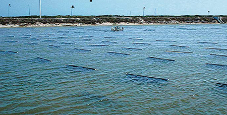 Article image for Impact of high-performance substrate technology on intensive commercial shrimp farm