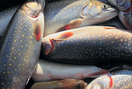 Article image for Mine water aquaculture: A West Virginia success story