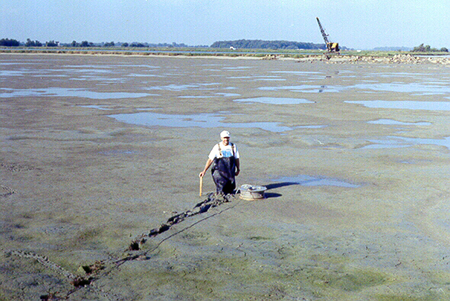 Article image for Sediment accumulation in channel catfish production ponds