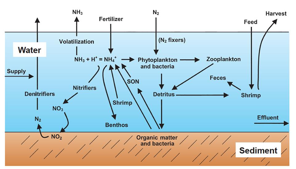 total ammonia nitrogen