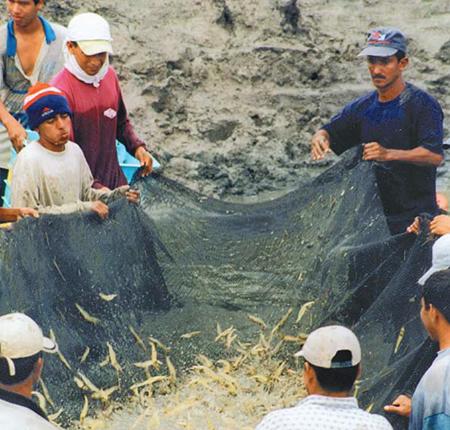 Inland shrimp farming