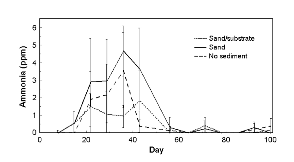sand sediment