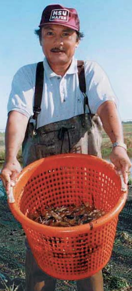 Article image for Grow-out test of freshwater prawns finds effects of feed protein levels limited