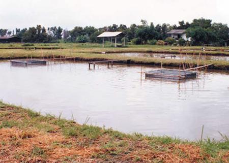 Cage-cum-pond