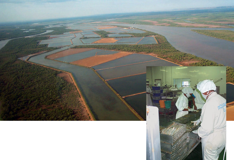 Article image for Shrimp farming in Madagascar