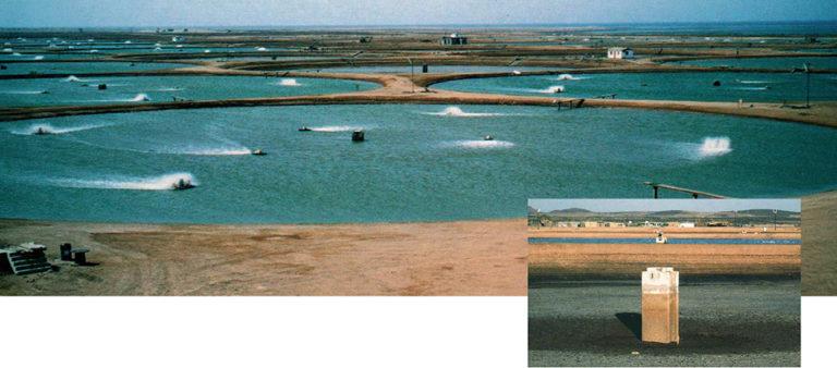Article image for Sustainable and profitable shrimp farming in Saudi Arabia
