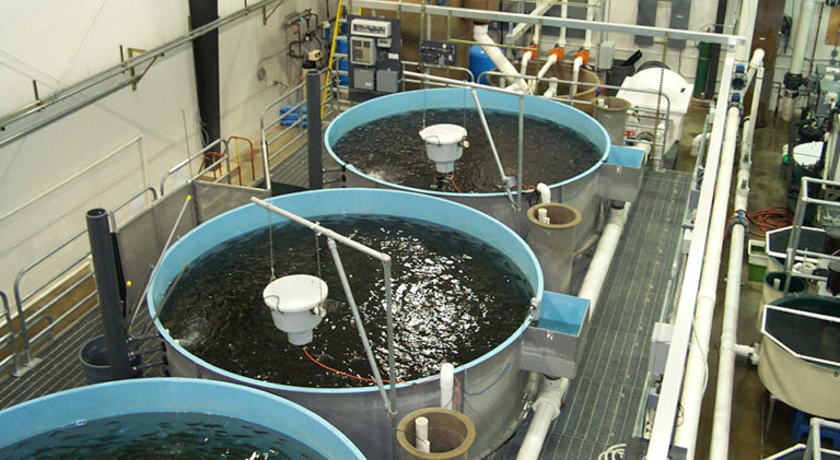 Article image for Biosecurity in intensive aquaculture: Don't build without it