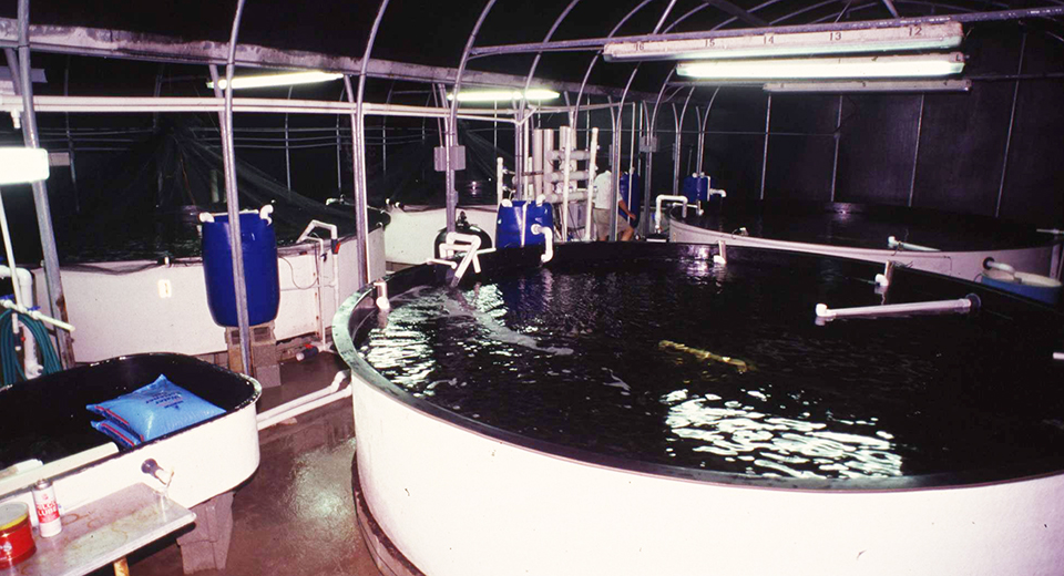 Article image for Advanced conditioning systems for marine fish broodstock
