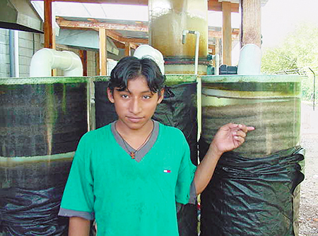 Article image for Honduras hatchery uses recirculation systems for shrimp broodstock maturation