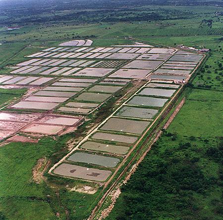 Article image for Inland shrimp farming in Ecuador