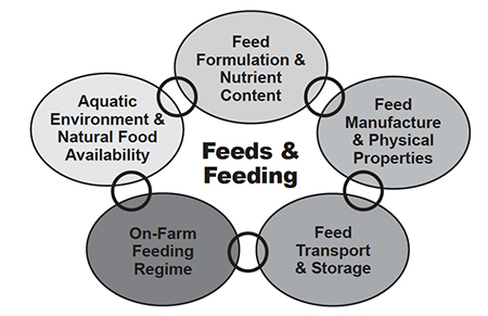 Article image for Shrimp feeds and management: Golden rules for success