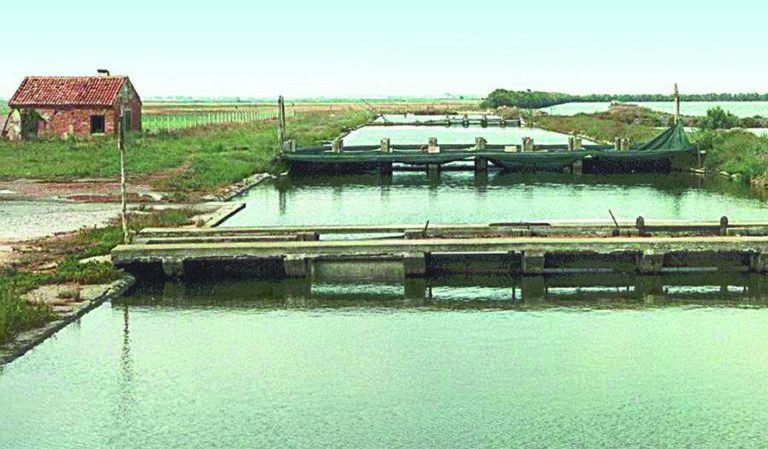 Article image for Shrimp farming in Italy: Status and perspectives