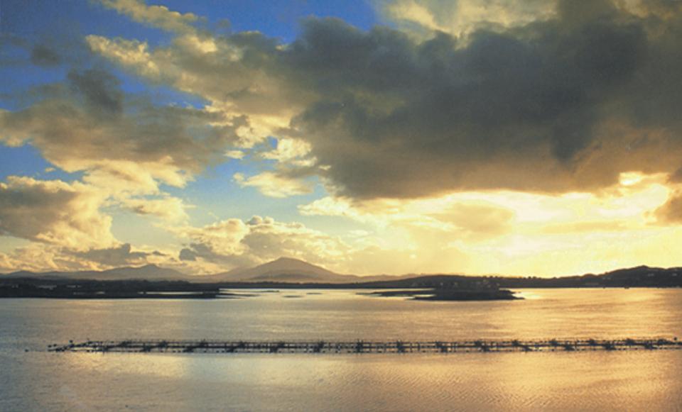 Irish aquaculture