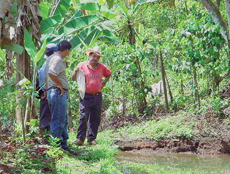 small-scale tilapia producers