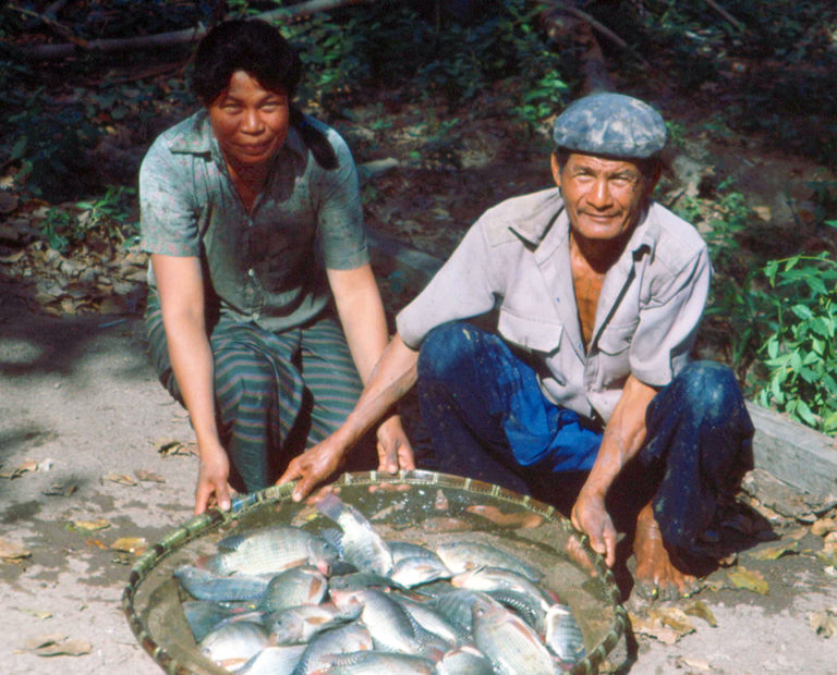 Article image for Role of tilapia in rural aquaculture