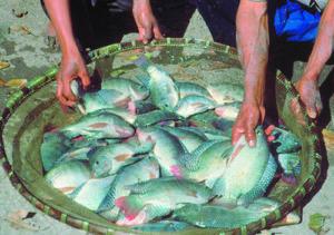 rural aquaculture