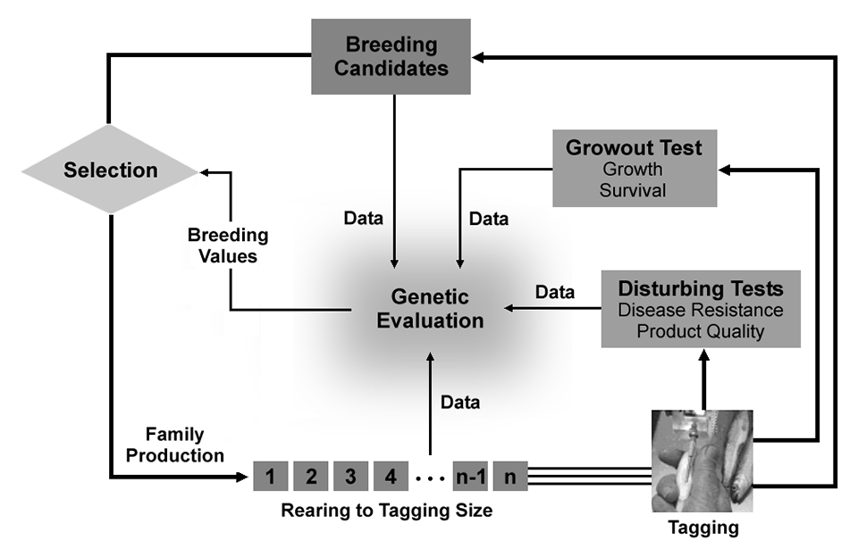 optimization of selective breeding