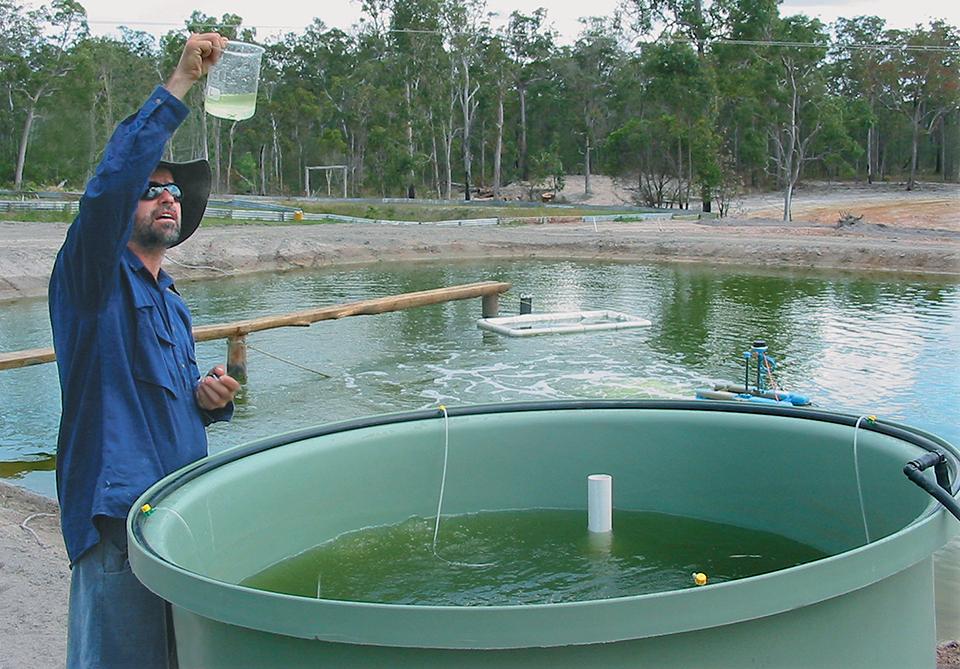 inland prawn farming