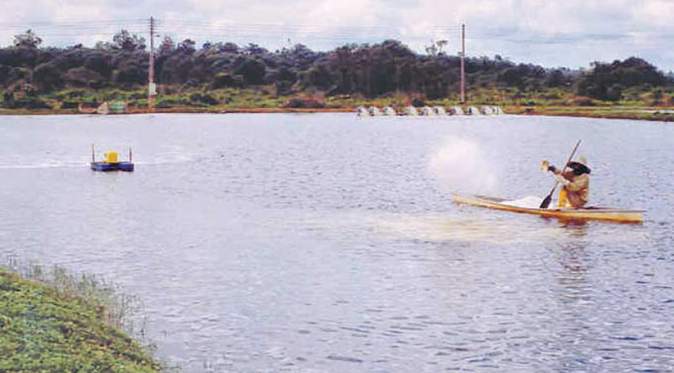Article image for Chemical fertilizers in pond aquaculture