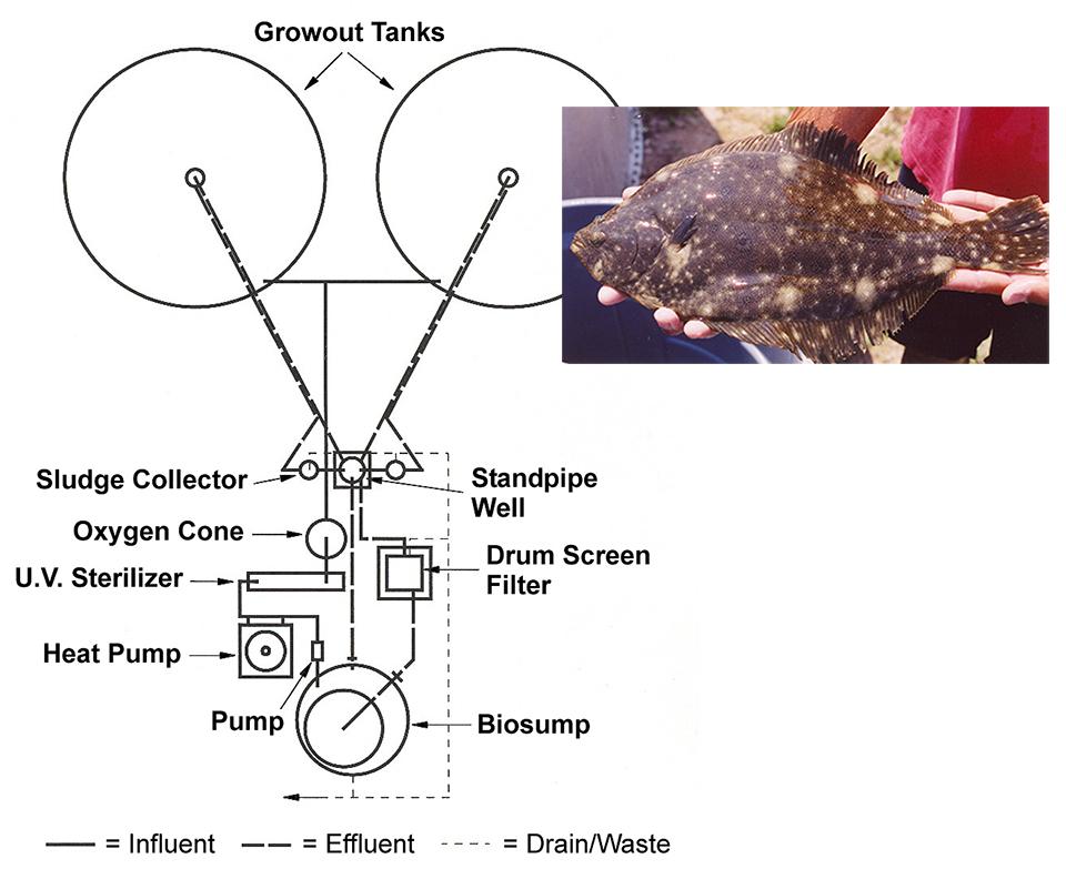 microbead media