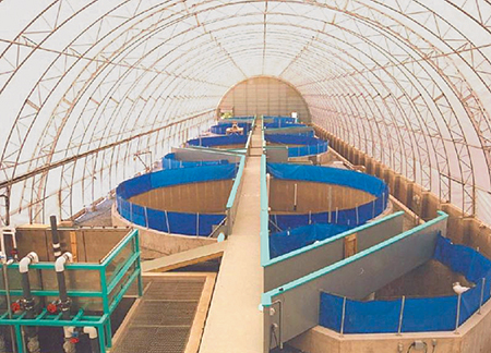 Article image for Survey defines RAS finfish aquaculture in United States, Canada
