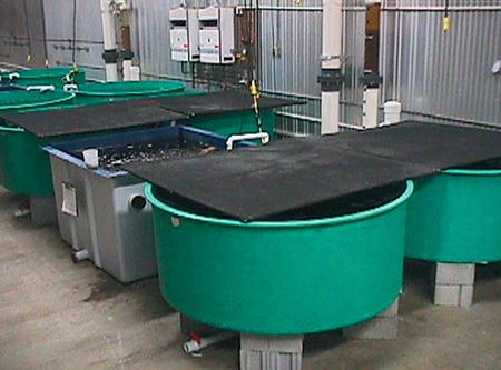 RAS finfish aquaculture