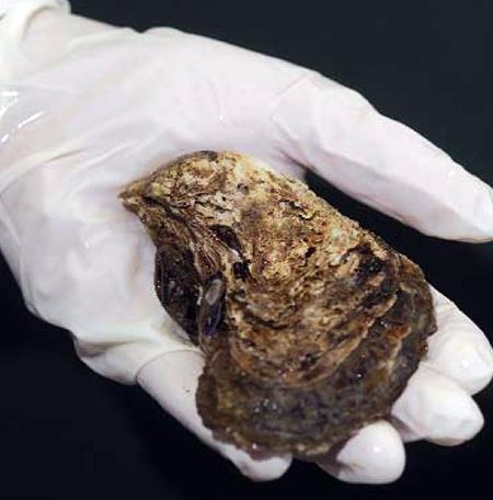 shellfish diseases