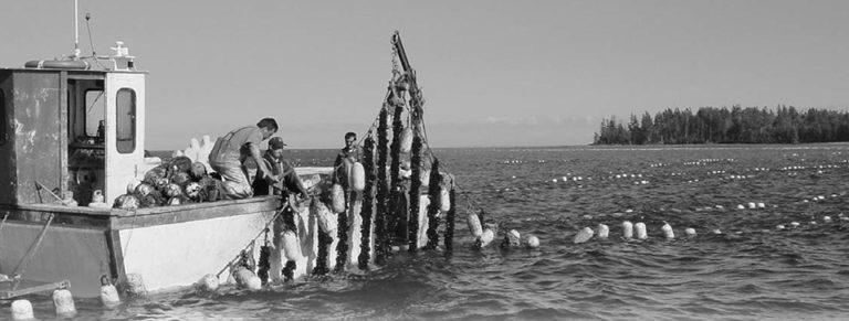 Article image for Principles of animal husbandry for shellfish culturists