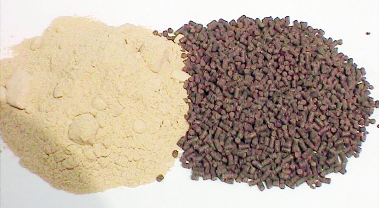 Article image for New ingredients for shrimp feeds, Part 1