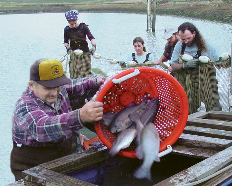 Article image for Culture of largemouth bass in the United States