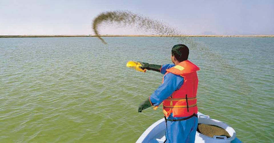 shrimp in Saudi Arabia