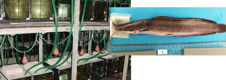 Article image for Netherlands study links fish feeding behavior with growth performance