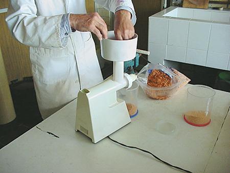 dried artemia